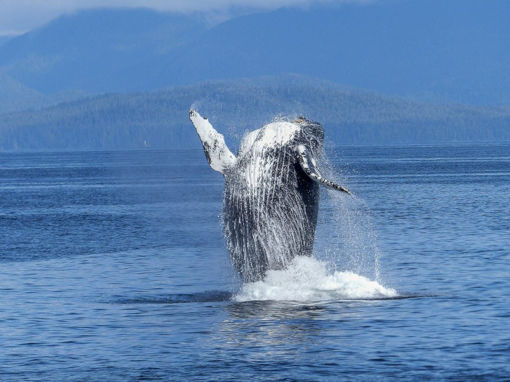 saving the oceans & the whales, wale